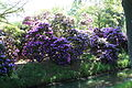 Rhododendronpark Bremen 20090513 026.JPG