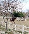 Rider at Buffalo Meadows Ranch, San Timoteo Canyon, Redlands, CA 2-2012 (6882297149).jpg