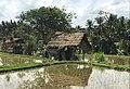 Rise field, Ubud, Bali 1.jpg
