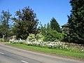 Roadside flowers - geograph.org.uk - 185605.jpg