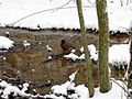 Robin-Bird-Snow ForestWander.jpg