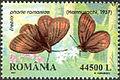 Romania2002 Erebia pharte romaniae.jpg
