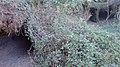 Roques Volcàniques - panoramio.jpg