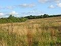 Rough grassland, Newton Tracey - geograph.org.uk - 964785.jpg