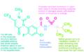Saflufenacil functional moieties.png