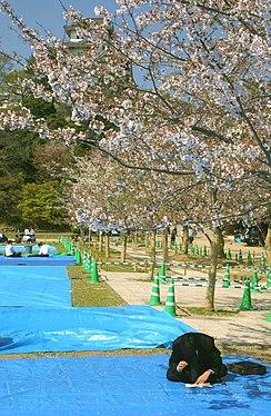 Sakuyra keeper at Himeji in Japan.jpg