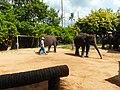 "Samui 2013 May ""Island Safari"" - panoramio (3).jpg"