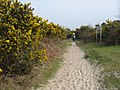 Sand and gorse, Upton Heath - geograph.org.uk - 1233779.jpg