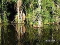 Sandoval , Tambopata - panoramio (20).jpg