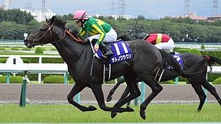 Satono Crown Japanese-bred Thoroughbred racehorse
