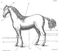 Saunier - La Parfaite Connaissance des chevaux 204.png