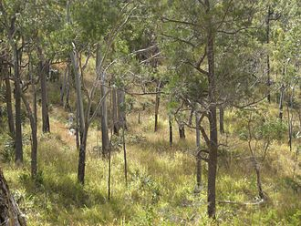 Mount Archer National Park - Eucalypt woodland, Mount Archer National Park