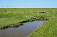 Schleswig-Holstein, Neufelderkoog, Biosphärenreservat Schleswig-Holstein Wadden Sea and adjacent areas NIK 7228.jpg