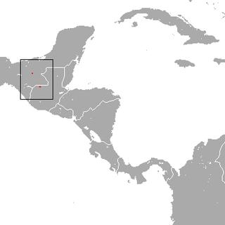 Sclaters shrew species of mammal