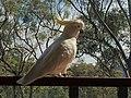 Scotland Island Sydney NSW 28.jpg