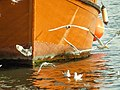 Seagulls and a Boat 2.jpg