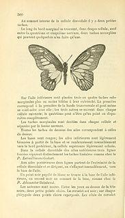 <i>Graphium aurivilliusi</i> species of insect