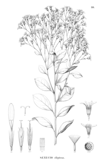 P. desiderabilis