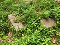 Shady Grove Cemetery Memphis TN 2.jpg
