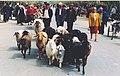 Sheep (8267457380).jpg