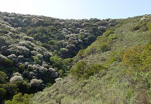 Aspect (geography) -  Slope effect, a vegetational result of aspect, in evidence in the coastal sage scrub community of southern California's Santa Monica Mtns. The slope on the left side is north-facing, thus moister and dominated by Ceanothus sp.. The south-facing slope on the right side is much drier (receiving more direct sun), and is more sparsely vegetated with the more drought tolerant Artemisia californica and Yucca whipplei.