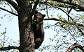 Small bear on the tree.jpg
