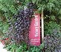 Smithsonian Gardens in October (22758726071).jpg