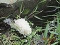 Snail Egg.JPG