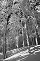 Sninský kameň (v zime) 078 B&W.jpg
