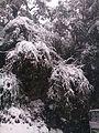 Snow filled Tree.jpg