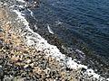 Soap Lake (2003-03-09) 04.jpg
