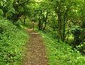 South West Coast Path above Bynorth Cliff.jpg