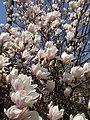 Spring (3426783175).jpg