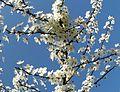 Spring - panoramio (50).jpg