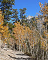 Spring Mountains Bristlecone Trail 1.jpg