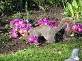 Spring in St. James Park - London (2329818798).jpg