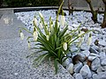 Spring is on its way - 2010-03-08 (4417185169).jpg