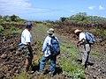Starr-020422-0065-Bidens pilosa-fenceline road with Art and crew-Puu o Kali-Maui (23920254294).jpg