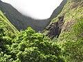 Starr-090720-3158-Aleurites moluccana-habit view black gorge-Iao Valley Rd-Maui (24852351282).jpg