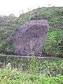Starr-091104-9326-Hedychium flavescens-habitat with rock slide mesh-Hana Hwy-Maui (24358428344).jpg