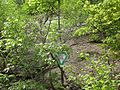 Steinbruch am Weinberg Herborn 7.jpg
