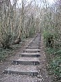 Steps within Trosley Country Park - geograph.org.uk - 1752024.jpg