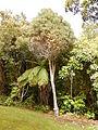 Stewart Island Moturau Moana Native Gardens - Southern Rata.jpg