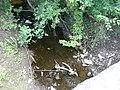 Stream at House Carr Bridge - geograph.org.uk - 890219.jpg