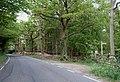 Strowling Wood - geograph.org.uk - 414041.jpg