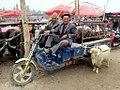 Sunday Livestock Market (40687621185).jpg