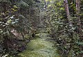 Swamp Setka drainage canal. 0226.jpg