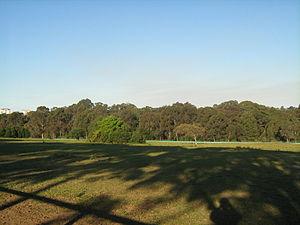 Sydney Turpentine-Ironbark Forest - Image: Sydney Turpentine Ironbark Forest, Yaralla Estate, Concord West NSW 1