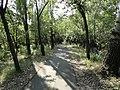 Szarvasról Békésszentandrásra vezető milleneumi kerékpárút része - panoramio.jpg