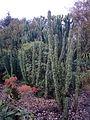 Tall cacti, Porto Botanical gardens..jpg